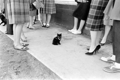 Black cat12