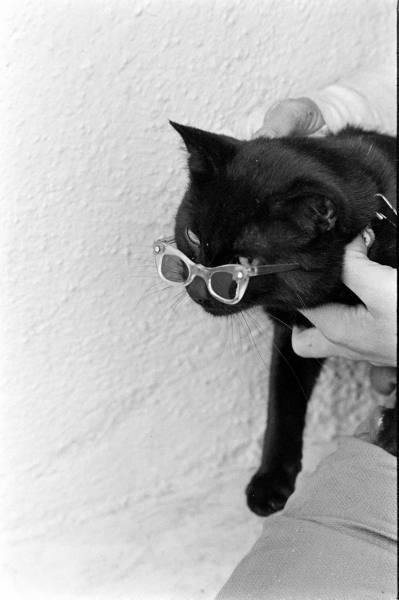 Black cat9