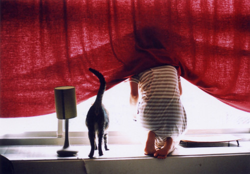 Cat,curtain,girl,hide,red,window-49a6766e44bfb201fc1bf3ae25471114_h