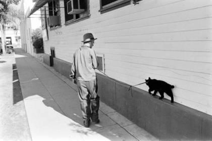 Black cat13
