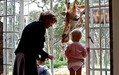 Giraffe_1447103c