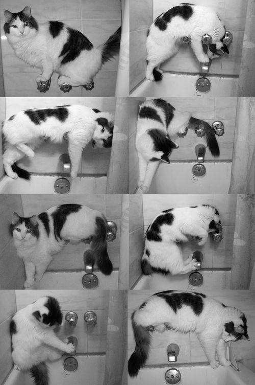 Sillycat2