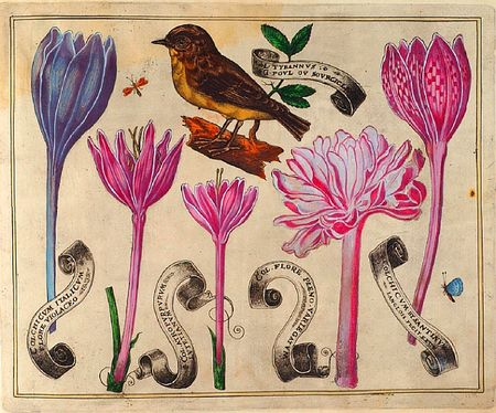 Livres-de-fleurs-1620-p24-bird-and-pink-and-purple-flowers