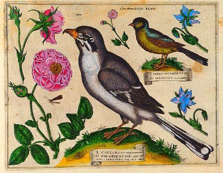Livres-de-fleurs-1620-p26-bird-and-roses
