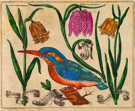 Livres-de-fleurs-1620-p28-blue-kingfisher-and-lillies