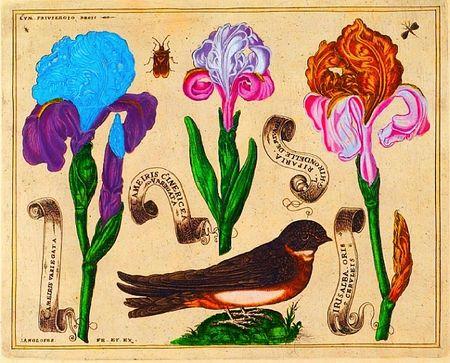 Livres-de-fleurs-1620-pl4-mod