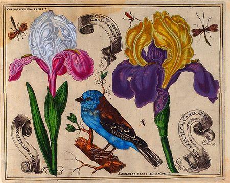 Livres-de-fleurs-1620-p22-blue-bird-and-irises