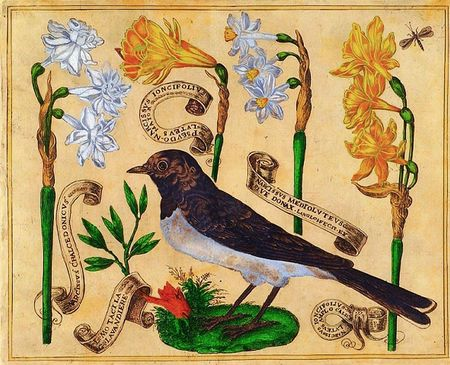 Livres-de-fleurs-1620p6-bird-and-yellow-and-white-narcissis-daffodils